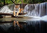 wandmotiv24 Fototapete liegender Tiger Wasserfall, XL 350 x 245 cm - 7 Teile, Fototapeten, Wandbild, Motivtapeten, Vlies-Tapeten, Wald Dschungel Bäume Tier M6544