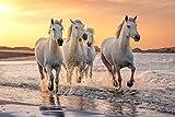 PFERDE Fototapete VLIES-250x186 cm (2935A)-Natur Landschaft Pferd Pony Strand Meer See Tiere Wandtapete-Inkl. Kleister-Vliestapete Bild Dekoration Wand-Dekor Moderne Motiv-Tapete Panorama Poster XXL