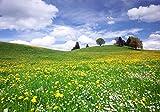 wandmotiv24 Fototapete Sommerwiese Hügel Blumenwiese, L 300 x 210 cm - 6 Teile, Fototapeten, Wandbild, Motivtapeten, Vlies-Tapeten, gelbe, Blüten, weisse, Blumen M0335
