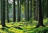 wandmotiv24 Fototapete Wald Stämme Wiese XS 150 x 105cm - 3 Teile Fototapeten, Wandbild, Motivtapeten, Vlies-Tapeten Grün, Stamm, Bäume M5674