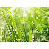 Vlies Fototapete PREMIUM PLUS Wand Foto Tapete Wand Bild Vliestapete - Blumen Blüte Natur - no. 199 Natur Gras Wiese Halm Sonne, Größe:200x140cm Vlies