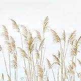3D Fototapete Tapeten Schilf pflanzen Vlies Wandtapete Tapete Fototapeten moderne Wandbild Wand Schlafzimmer Wohnzimmer 350x256 cm - 7 Streifen