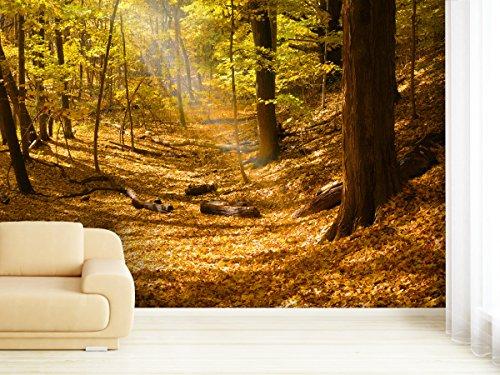 fototapete autumn forest in verschiedenen gren als papiertapete oder vliestapete whlbar pvc frei. Black Bedroom Furniture Sets. Home Design Ideas