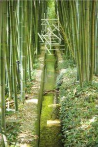Fototapete Bambus