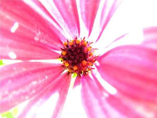 Fototapete Orchidee & Blumen